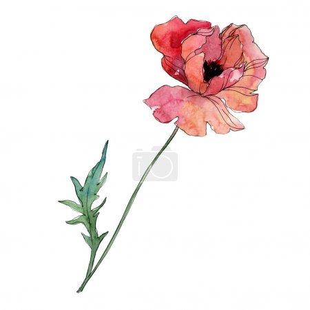 Photo pour Fleur botanique florale de pavot. Fleur sauvage de neige sauvage de feuille de source d'isolement. Ensemble d'illustration de fond d'aquarelle. Aquarelle de mode de dessin d'aquarelle d'aquarelle d'aquarelle. Élément d'illustration de coquelicots d'isolement. - image libre de droit