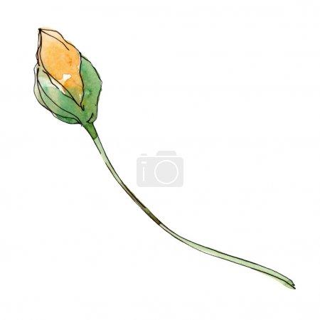 Photo pour Fleur botanique florale de pavot. Fleur sauvage sauvage de feuille de source. Ensemble d'illustration de fond d'aquarelle. Aquarelle de dessin à l'aquarelle. Élément d'illustration de coquelicots d'isolement. - image libre de droit