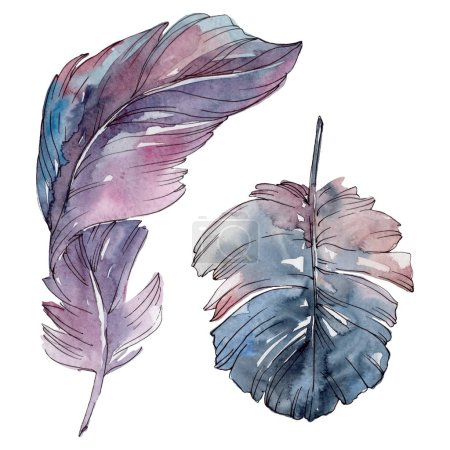 Photo for Colorful bird feather from wing isolated. Watercolor background illustration set. Watercolour drawing fashion aquarelle isolated. Isolated feathers illustration element. - Royalty Free Image