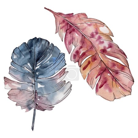 Photo pour Plume colorée d'oiseau de l'aile isolée. Ensemble d'illustration de fond d'aquarelle. Aquarelle de mode de dessin d'aquarelle d'aquarelle d'aquarelle. Élément d'illustration de plumes d'isolement. - image libre de droit