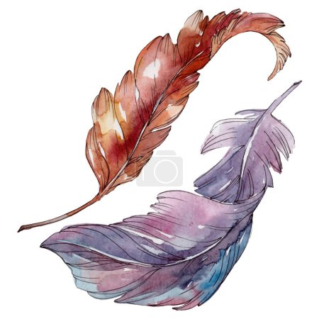 Photo pour Plume d'oiseau colorée de l'aile isolée. Ensemble d'illustration de fond aquarelle. Aquarelle dessin mode aquarelle isolé. Élément d'illustration de plumes isolées . - image libre de droit