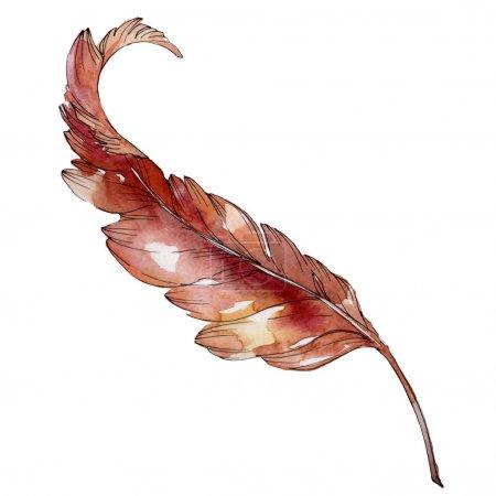 Photo pour Plume d'oiseau colorée de l'aile isolée. Ensemble d'illustration de fond aquarelle. Aquarelle dessin mode aquarelle isolé. Élément d'illustration de plumes isolées . - image libre de droit