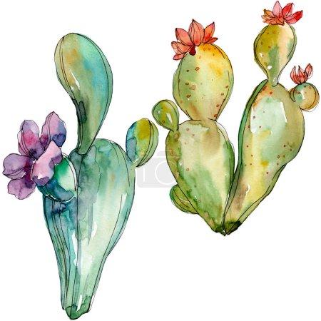 Photo pour Fleurs botaniques florales de cactus vert. Fleur sauvage de neige sauvage de feuille de source d'isolement. Ensemble d'illustration de fond d'aquarelle. Aquarelle de dessin à l'aquarelle. Élément isolé d'illustration de cactus. - image libre de droit