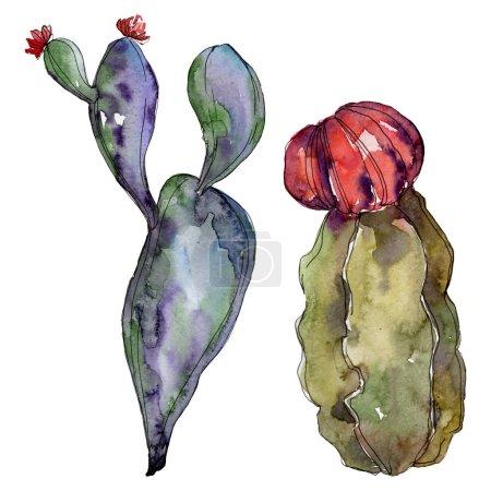 Foto de Flores botánicas florales de cactus. Hoja de primavera silvestre wildflower aislado. Conjunto de ilustraciones de fondo de acuarela. Acuarela dibujando moda acuarela. Elemento de ilustración de cactus aislado. - Imagen libre de derechos