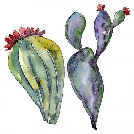 Photo pour Fleurs botaniques florales de cactus. Fleur sauvage de neige sauvage de feuille de source d'isolement. Ensemble d'illustration de fond d'aquarelle. Aquarelle de dessin à l'aquarelle. Élément isolé d'illustration de cactus. - image libre de droit