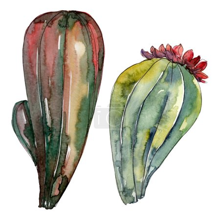 Photo pour Fleurs botaniques florales de cactus. Fleur sauvage de neige sauvage de feuille de source d'isolement. Ensemble d'illustration de fond d'aquarelle. Aquarelle de dessin à l'aquarelle. Élément isolé d'illustration de cactus. - image libre de droit