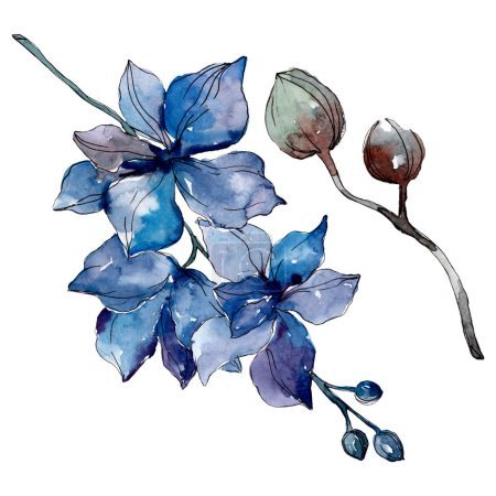 Photo pour Fleurs botaniques florales d'orchidée. Fleur sauvage de neige sauvage de feuille de source d'isolement. Ensemble d'illustration de fond d'aquarelle. Aquarelle de dessin à l'aquarelle. Élément d'illustration d'orchidées d'isolement. - image libre de droit