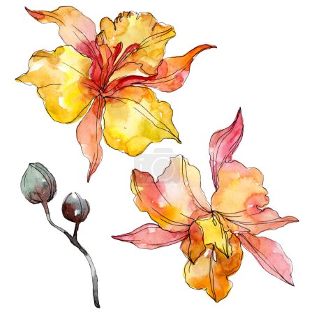 Photo for Orchid floral botanical flowers. Wild spring leaf wildflower isolated. Watercolor background illustration set. Watercolour drawing fashion aquarelle. Isolated orchids illustration element. - Royalty Free Image