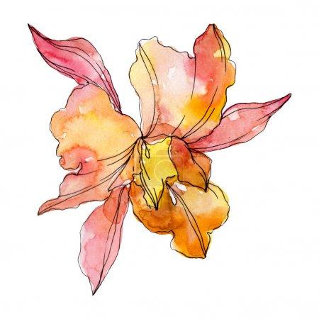 Photo pour Fleurs botaniques florales d'orchidée orange. Fleur sauvage de neige sauvage de feuille de source d'isolement. Ensemble d'illustration de fond d'aquarelle. Aquarelle de dessin à l'aquarelle. Élément d'illustration d'orchidées d'isolement. - image libre de droit