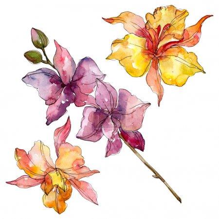 Foto de Flores botánicas florales de orquídeas. Hoja de primavera silvestre wildflower aislado. Conjunto de ilustraciones de fondo de acuarela. Acuarela dibujando moda acuarela. Elemento de ilustración de orquídeas aisladas. - Imagen libre de derechos