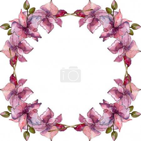 Photo pour Fleurs botaniques florales d'orchidée. Fleur sauvage sauvage de feuille de source. Ensemble d'illustration de fond d'aquarelle. Aquarelle de dessin à l'aquarelle. Carré d'ornement de bordure de cadre. - image libre de droit