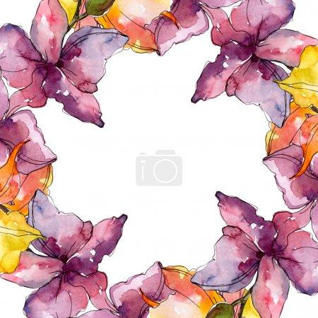 Foto de Flores botánicas florales de orquídeas. Flor silvestre de la hoja de primavera wildflower. Conjunto de ilustraciones de fondo de acuarela. Acuarela dibujando moda acuarela. Marco borde ornamento cuadrado. - Imagen libre de derechos