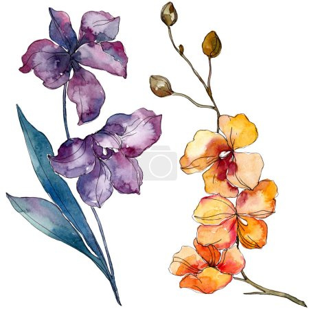 Photo pour Fleurs botaniques florales d'orchidée. Fleur sauvage de neige sauvage de feuille de source d'isolement. Ensemble d'illustration de fond d'aquarelle. Aquarelle de mode de dessin d'aquarelle d'aquarelle d'aquarelle. Élément d'illustration d'orchidées d'isolement. - image libre de droit
