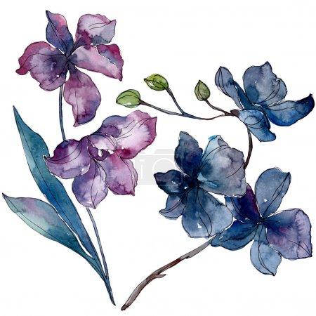 Photo pour Fleurs botaniques florales d'orchidée. Fleur sauvage de neige sauvage de feuille de source d'isolement. Ensemble d'illustration de fond d'aquarelle. Aquarelle de mode de dessin d'aquarelle d'aquarelle d'aquarelle. Élément d'illustration d'orchidées d'isolement. - image libre de droit