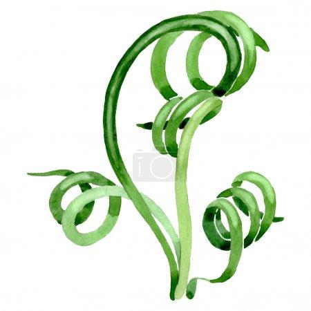 Photo pour Fleurs botaniques florales succulentes vertes. Feuille sauvage de printemps fleur sauvage isolée. Ensemble d'illustration de fond aquarelle. Aquarelle dessin mode aquarelle. Elément d'illustration succulents isolés . - image libre de droit
