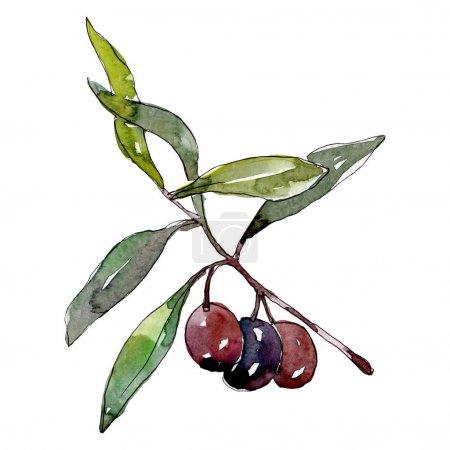 Photo pour Branchement d'olive avec le fruit noir. Ensemble d'illustration de fond d'aquarelle. Aquarelle de mode de dessin d'aquarelle d'aquarelle d'aquarelle. Élément d'illustration d'olives d'isolement. - image libre de droit