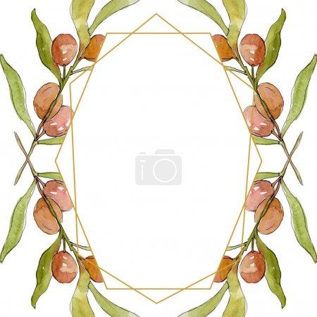 Foto de Rama de olivo con fruta negra y verde. Conjunto de ilustraciones de fondo de acuarela. Acuarela dibujando moda acuarela aislada. Marco borde cristal ornamento cuadrado. - Imagen libre de derechos