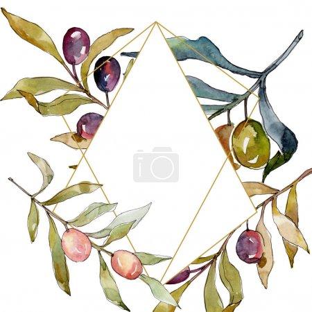 Photo pour Branchement d'olivier avec le fruit noir et vert. Ensemble d'illustration de fond d'aquarelle. Aquarelle de mode de dessin d'aquarelle d'aquarelle d'aquarelle. Carré d'ornement de cristal de bordure de cadre. - image libre de droit