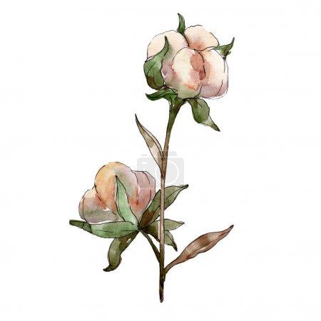 White cotton floral botanical flowers. Watercolor background illustration set. Isolated cotton illustration element.