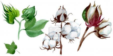 Photo pour Fleur botanique florale en coton blanc. Feuille de printemps sauvage fleur sauvage. Ensemble d'illustration de fond aquarelle. Aquarelle dessin mode aquarelle. Elément d'illustration en coton isolé . - image libre de droit