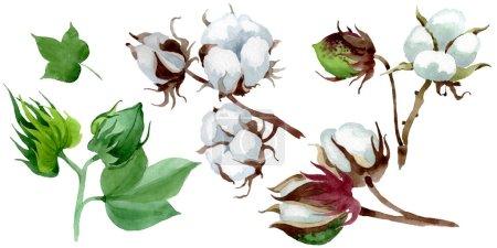 Photo pour Fleur botanique florale de coton blanc. Fleur sauvage sauvage de feuille de source. Ensemble d'illustration de fond d'aquarelle. Aquarelle de dessin à l'aquarelle. Élément isolé d'illustration de coton. - image libre de droit
