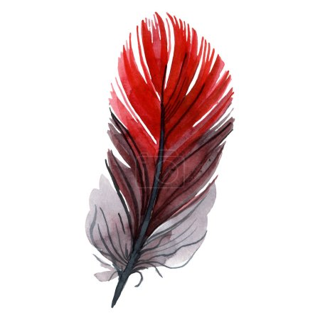 Photo for Colorful bird feather from wing isolated. Watercolor background illustration set. Watercolour drawing fashion aquarelle isolated. Isolated feather illustration element. - Royalty Free Image