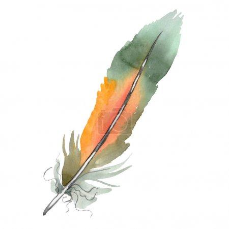 Foto de Coloridapluma de pájaro de ala aislada. Conjunto de ilustraciones de fondo de acuarela. Acuarela dibujando moda acuarela aislada. Elemento de ilustración de plumas aisladas. - Imagen libre de derechos