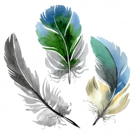 Photo pour Plume d'oiseau colorée de l'aile isolée. Ensemble d'illustration de fond aquarelle. Aquarelle dessin mode aquarelle isolé. Élément isolé d'illustration de plumes . - image libre de droit