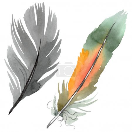 Photo pour Plume colorée d'oiseau de l'aile isolée. Ensemble d'illustration de fond d'aquarelle. Aquarelle de mode de dessin d'aquarelle d'aquarelle d'aquarelle. Élément isolé d'illustration de plume. - image libre de droit