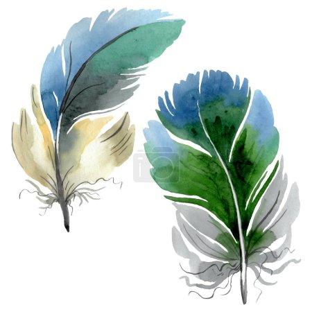 Photo pour Plume d'oiseau colorée de l'aile isolée. Ensemble d'illustration de fond aquarelle. Aquarelle dessin mode aquarelle isolé. Élément isolé d'illustration de plumes . - image libre de droit