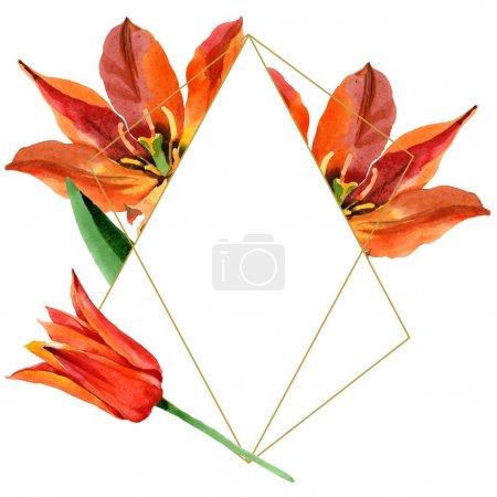 Photo pour Fleur botanique florale de tulipe orange. Feuille sauvage de printemps fleur sauvage isolée. Ensemble d'illustration de fond aquarelle. Aquarelle dessin mode aquarelle. Cadre bordure cristal ornement carré . - image libre de droit