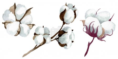 Photo for White cotton floral botanical flowers. Wild spring leaf wildflower. Watercolor background illustration set. Watercolour drawing fashion aquarelle. Isolated cotton illustration element. - Royalty Free Image
