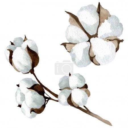 Photo pour Fleurs botaniques florales en coton blanc. Feuille de printemps sauvage fleur sauvage. Ensemble d'illustration de fond aquarelle. Aquarelle dessin mode aquarelle. Elément d'illustration en coton isolé . - image libre de droit