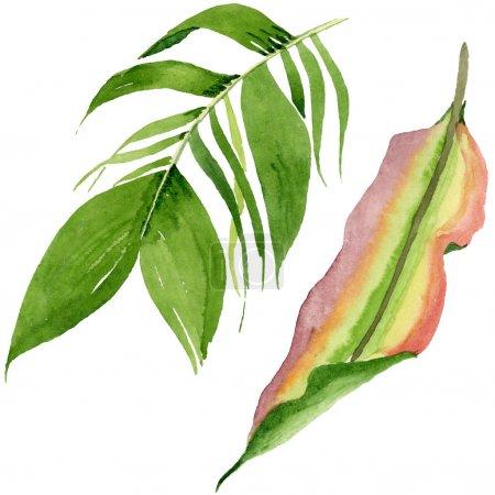 Photo pour Été tropical hawaïen exotique. L'arbre de plage de palmier laisse la jungle botanique. Ensemble d'illustration de fond d'aquarelle. Aquarelle de dessin à l'aquarelle. Élément d'illustration de feuilles d'isolement. - image libre de droit