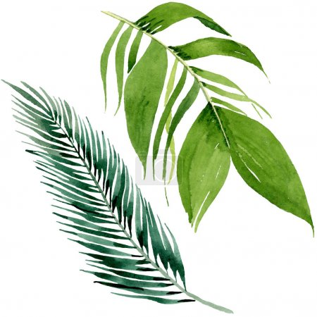 Photo for Exotic tropical hawaiian summer. Palm beach tree leaves jungle botanical. Watercolor background illustration set. Watercolour drawing fashion aquarelle. Isolated leaves illustration element. - Royalty Free Image