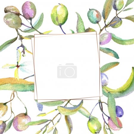 Photo pour Branche d'olivier aux fruits noirs et verts. Ensemble d'illustration de fond aquarelle. Aquarelle dessin mode aquarelle isolé. Cadre bordure ornement carré . - image libre de droit