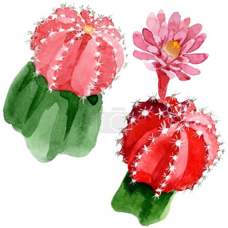 Photo for Red and green cacti isolated on white watercolor illustration set. - Royalty Free Image