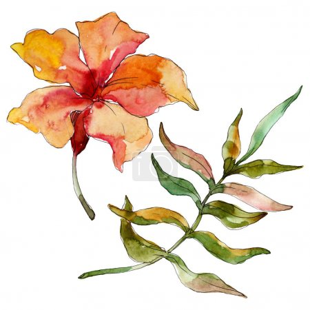 Photo pour Été tropical hawaïen exotique. L'arbre de plage de palmier laisse la fleur botanique de jungle. Ensemble d'illustration de fond d'aquarelle. Aquarelle de dessin à l'aquarelle. Élément d'illustration de fleurs d'isolement. - image libre de droit