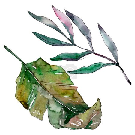 Photo for Exotic tropical hawaiian summer. Palm beach tree leaves jungle botanical. Watercolor background illustration set. Watercolour drawing fashion aquarelle isolated. Isolated leaves illustration element. - Royalty Free Image