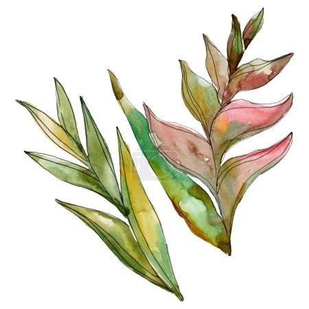 Photo pour Été tropical hawaïen exotique. L'arbre de plage de palmier laisse la jungle botanique. Ensemble d'illustration de fond d'aquarelle. Aquarelle de mode de dessin d'aquarelle d'aquarelle d'aquarelle. Élément d'illustration de feuilles d'isolement. - image libre de droit