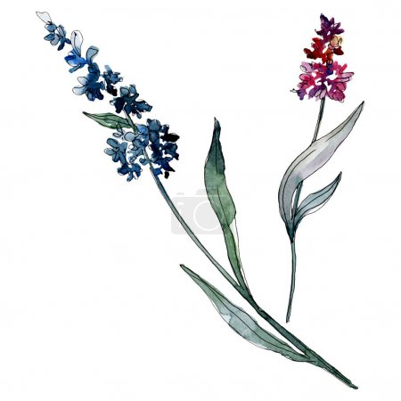 Photo for Lavender floral botanical flowers. Wild spring leaf wildflower isolated. Watercolor background illustration set. Watercolour drawing fashion aquarelle. Isolated levender illustration element. - Royalty Free Image