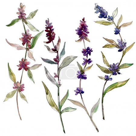 Photo for Purple lavender floral botanical flowers. Wild spring leaf wildflower isolated. Watercolor background illustration set. Watercolour drawing fashion aquarelle. Isolated lavender illustration element. - Royalty Free Image