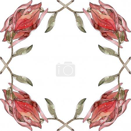 Photo pour Camelia fleurs botaniques florales. Feuille sauvage de printemps fleur sauvage isolée. Ensemble d'illustration de fond aquarelle. Aquarelle dessin mode aquarelle isolé. Cadre bordure ornement carré . - image libre de droit