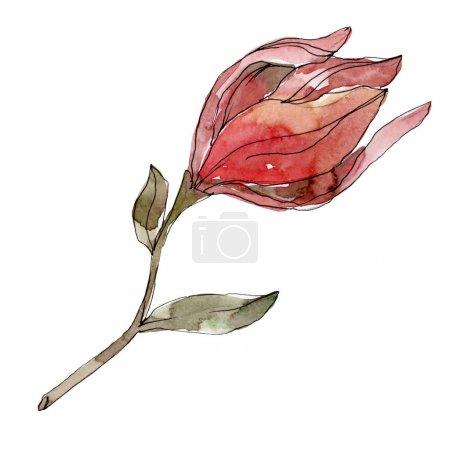 Photo pour Camelia fleurs botaniques florales. Feuille sauvage de printemps fleur sauvage isolée. Ensemble d'illustration de fond aquarelle. Aquarelle dessin mode aquarelle isolé. Elément d'illustration de camélia isolé . - image libre de droit