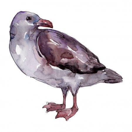 Photo pour Mouette d'oiseau de ciel dans une faune. Liberté sauvage, oiseau avec des ailes volantes. Ensemble d'illustration de fond d'aquarelle. Aquarelle de dessin à l'aquarelle. Élément isolé d'illustration de mouette. - image libre de droit