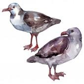 """Постер, картина, фотообои """"Чайка небесной птицы в дикой природе. Дикая свобода, птица с летающими крыльями. Набор фоновых иллюстраций акварели. Акварель рисунок моды акварели. Изолированный элемент иллюстрации чайки."""""""