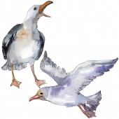 """Постер, картина, фотообои """"Чайка небесной птицы в дикой природе. Дикая свобода, птица с летающими крыльями. Набор фоновых иллюстраций акварели. Акварель рисунок моды акварели изолированы. Изолированный элемент иллюстрации чайки."""""""