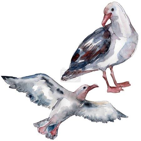 Photo pour Mouette d'oiseau de ciel dans une faune. Liberté sauvage, oiseau avec des ailes volantes. Ensemble d'illustration de fond d'aquarelle. Aquarelle de mode de dessin d'aquarelle d'aquarelle d'aquarelle. Élément isolé d'illustration de mouette. - image libre de droit