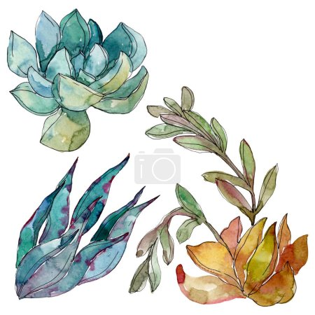 Photo for Succulents floral botanical flowers. Wild spring leaf wildflower. Watercolor background illustration set. Watercolour drawing fashion aquarelle. Isolated succulent illustration element. - Royalty Free Image