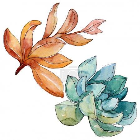 Photo pour Succulents fleurs botaniques florales. Fleur sauvage sauvage de feuille de source. Ensemble d'illustration de fond d'aquarelle. Aquarelle de dessin à l'aquarelle. Élément d'illustration succulent d'isolement. - image libre de droit